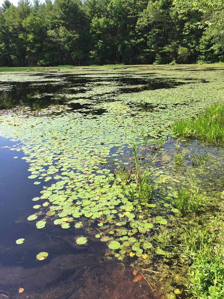 wetlands for blog